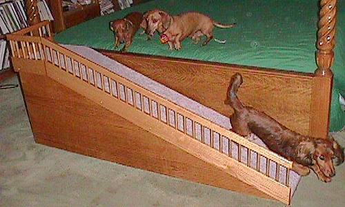 Dog Stairs Vs Ramp Chronicle Forums
